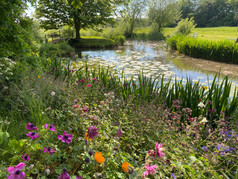 wildflowers by the moat