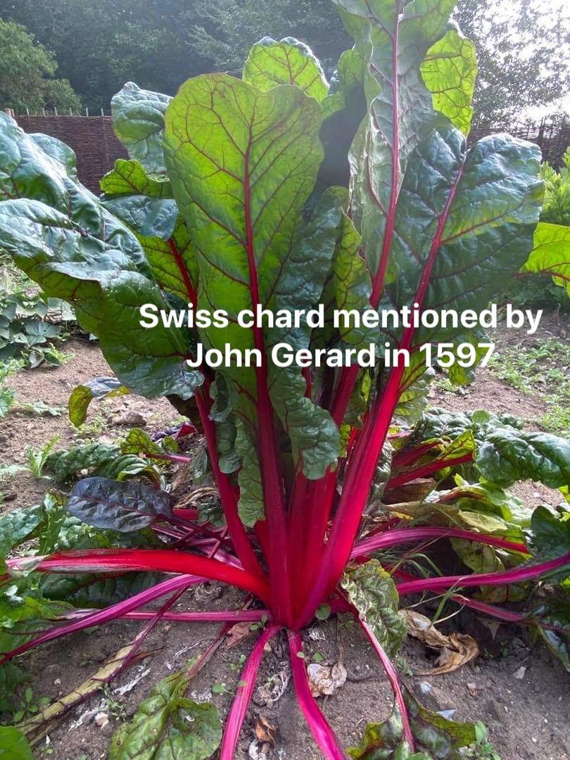 veg garden 9.jpg