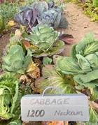 veg garden 6.jpg