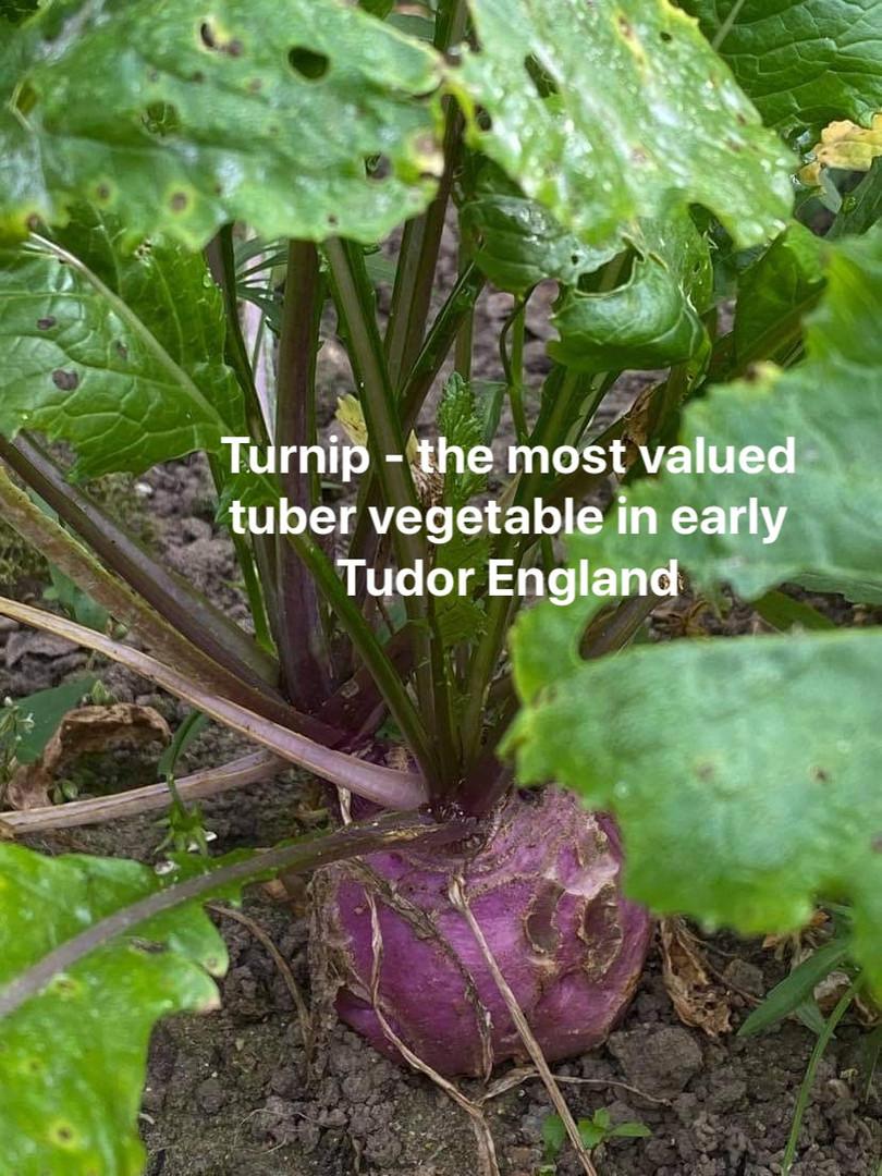 veg garden 12.jpg