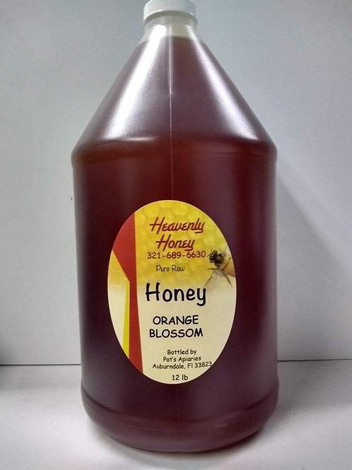 Orange Blossom Raw Honey,1 gallon