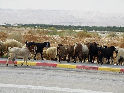 Israel 2014 Rad-26022014_165 web.JPG