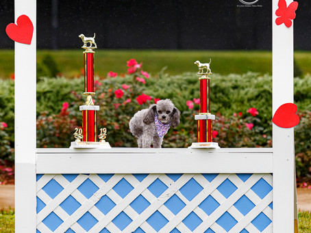 The 2nd Annual Aurora Pooch Parade