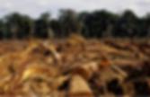 Ontbossing Togo