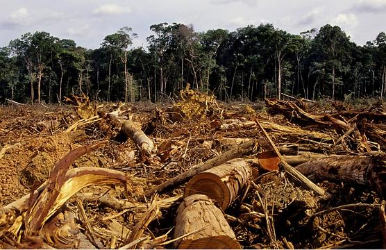 Déforestation Togo