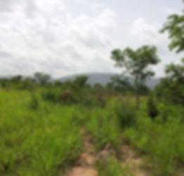 School van het Leven, de Ecologie en de Duurzame Ontwikkeling