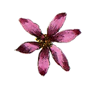 Pink%2520Illustrated%2520Flower_edited_e
