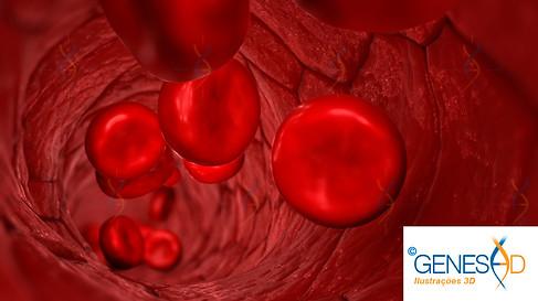 GENESE3D blood vessel