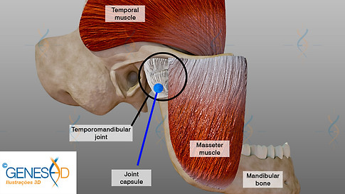 GENESE3D Temporomandibular joint