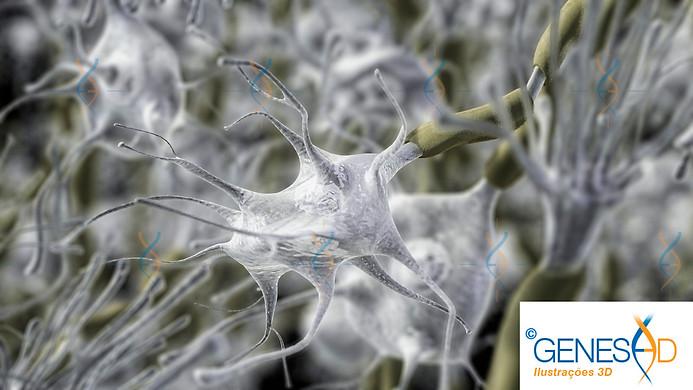 GENESE3D neurons