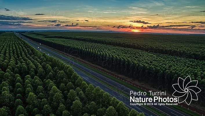 Araraquara, São Paulo, Brasil