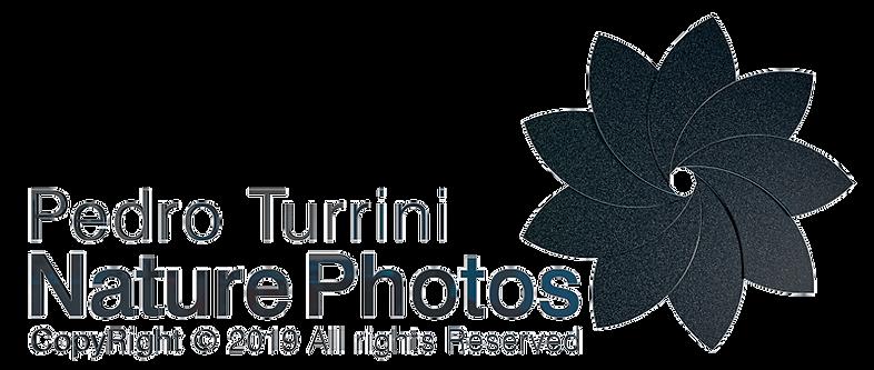 Logo Pedro Turrini Nature Photos