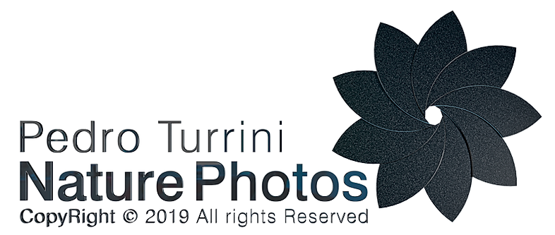 Logo Pedro Turrini Nature Photos