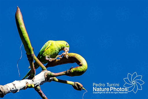 Pedro Turrini Nature Photos