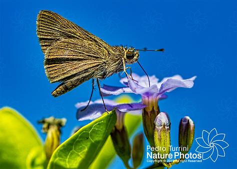 Moth not ident