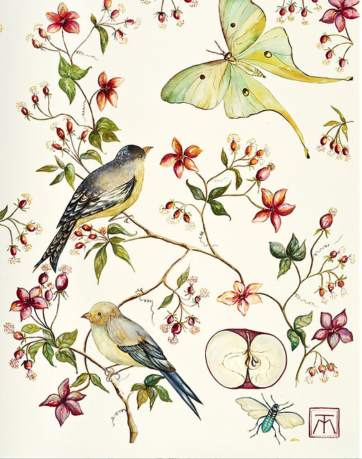 Acuarela birds