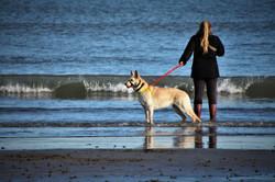 Dog Woman Beach