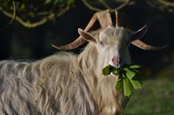 the lamb that eats free