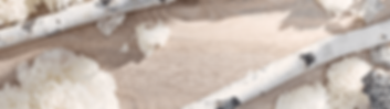 pure_forest_carousel_2424x1200_v1-banner