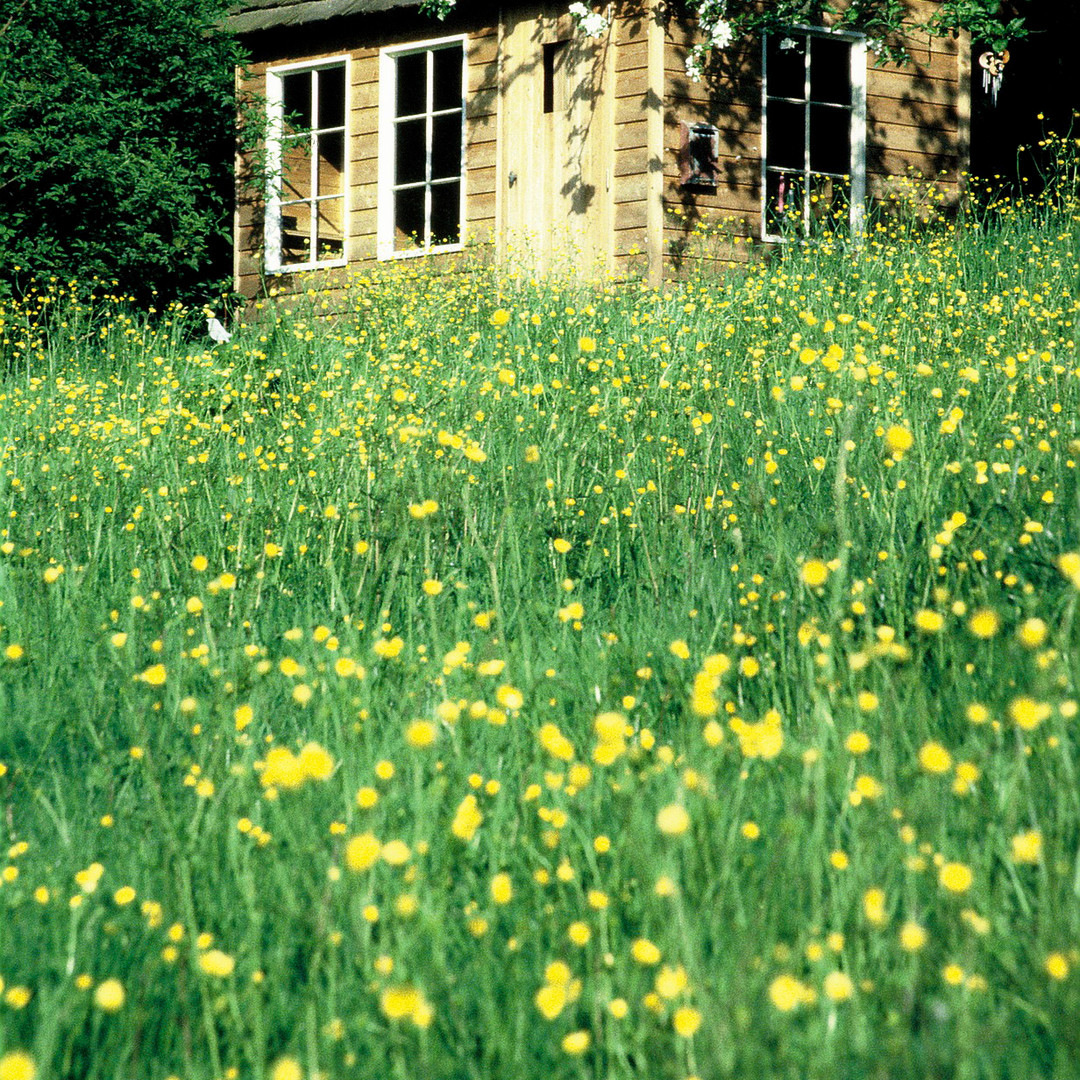 Cabane jardinier prairie - mélèze brut