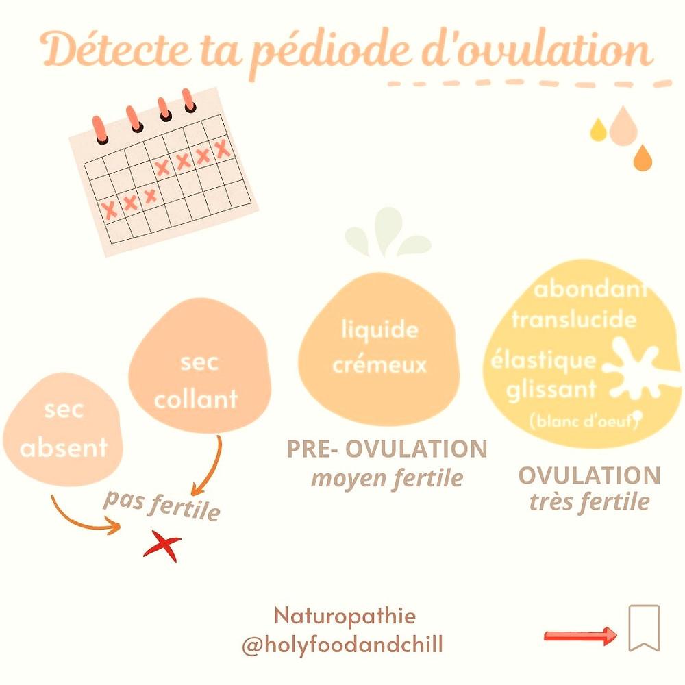 Période d'ovulation et fertilité