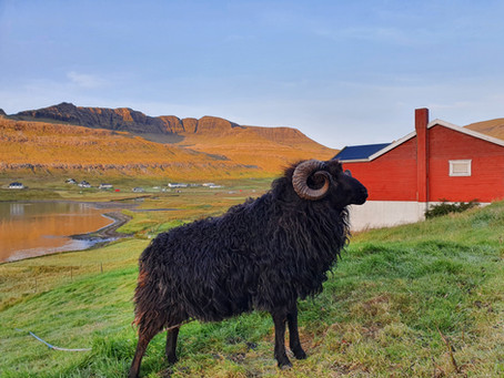 Saying goodbye to the gem that is the Faroe Islands