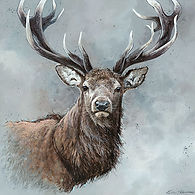 Stag-Looking-at-You.jpg