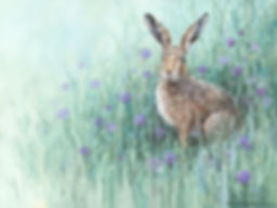 Purple-Hare.jpg