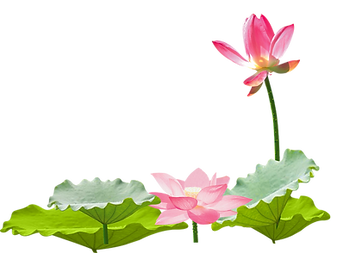 lotus-clipart-lotus.png