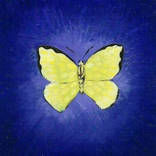 Yellow on Blue Butterfly
