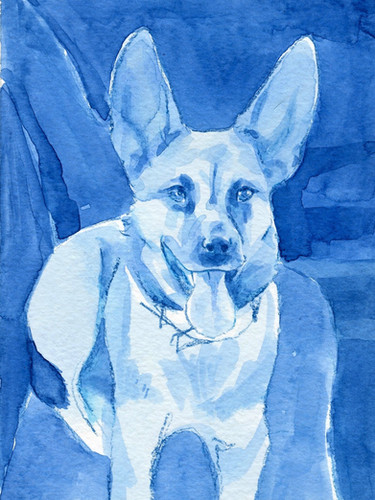 blue millie.jpg