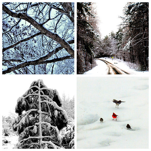 Winter Photographic Set Of (8) Cards
