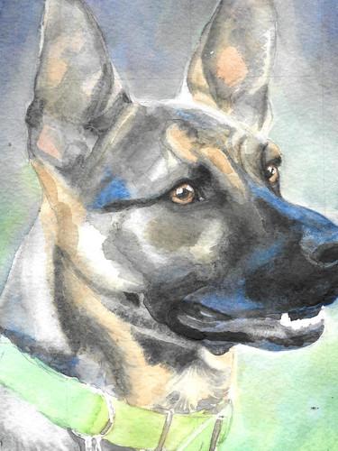pet-portrait-millie.jpg
