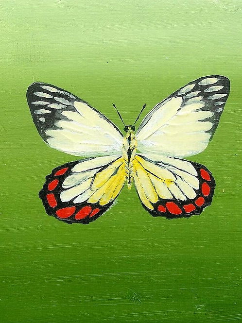 White Red and Yellow Butterfly