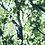 Thumbnail: Sunlight Branches
