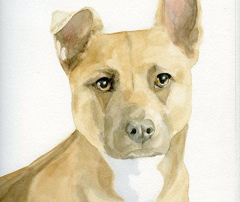 "Custom Pet Portrait, Full Color, 9""x12"""