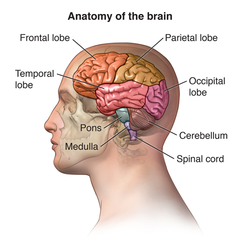 My Stroke was in the Pons, or Times Square of the brain.  Right there in the middle of everything.  I had about a grapefruit size of blood and fluid overtaking the whole center of my brain, and spinal cord