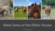 Other_Horses_1.png