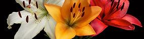 Flowers%20for%20banner_edited.jpg