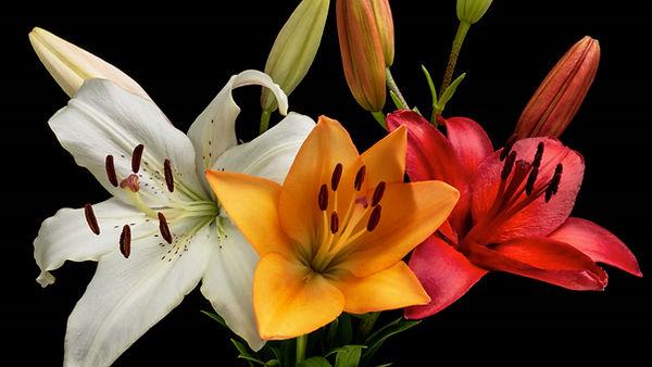 flowers in bloom.jpg