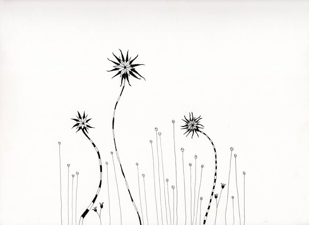 Zebraflowers