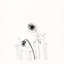 Puffflower