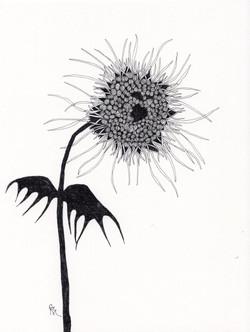 Birdflower