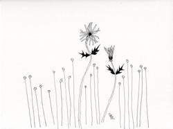 Bashfulflower