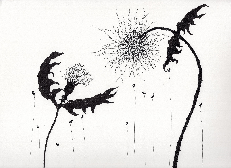 Storyteller, Birdflower series