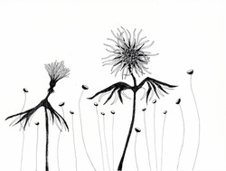 If I Could Fly, Birdflower series