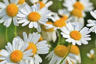 flowers-401490_1920.jpg
