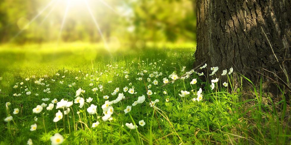 Séjour Massages, Nature et Chamanisme