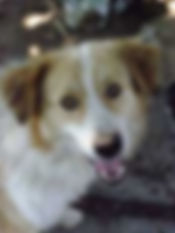aboutus dog.jpg