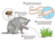 cattapeworm.jpg